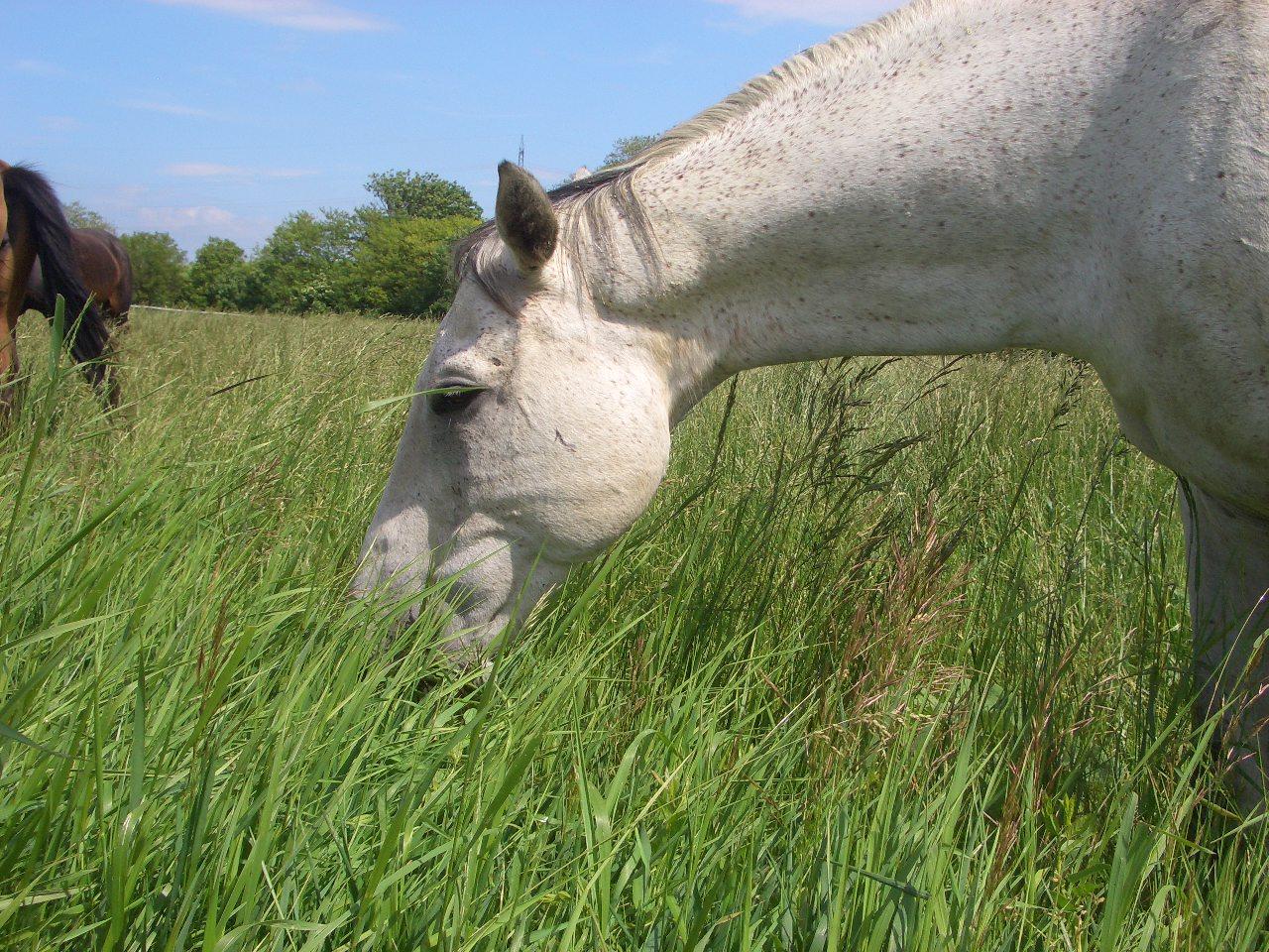 Auf unseren 4 ha Graskoppeln fühlen sich unsere Pferde stets gut aufgehoben!